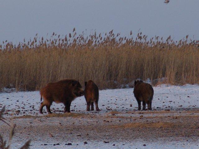 озеро кайнак армизонский район рыбалка